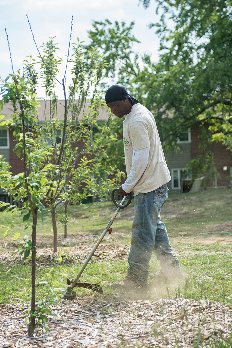 Asheville GreenWorks Food Tree Project
