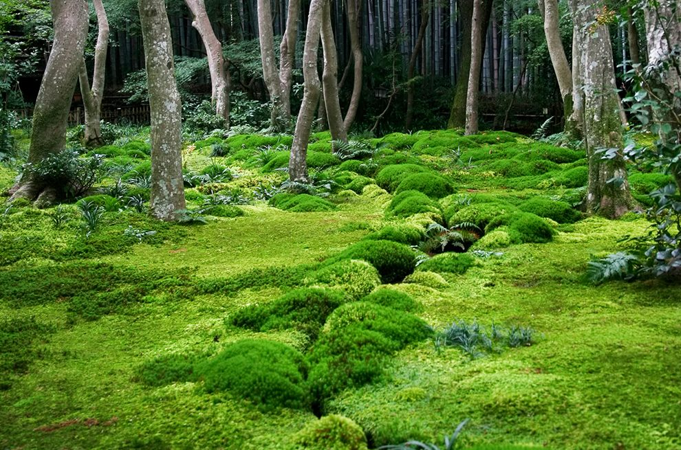 Nice Book Feature: The Magical World Of Moss Gardening   The Laurel Of Asheville