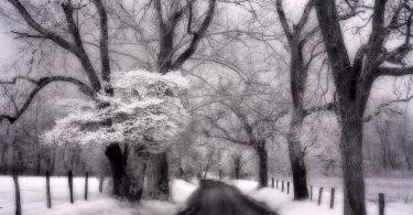 Infrared Photography: Artist Matthew Kraus