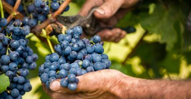 What Makes a Winemaker