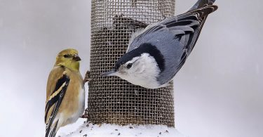 The Philosophy of Feeding Birds
