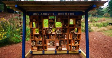 UNCA's Bee Hotel