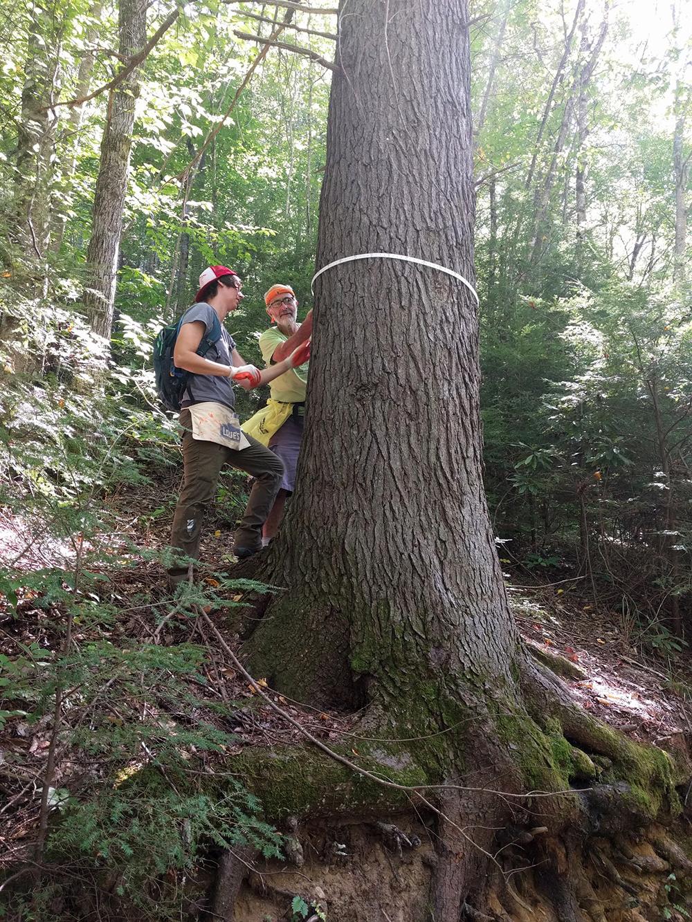 Eastern and Carolina Hemlock Conservation