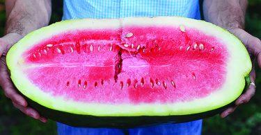 The Bradford Watermelon