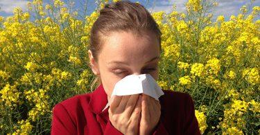 Asheville's Guide to Allergy Season