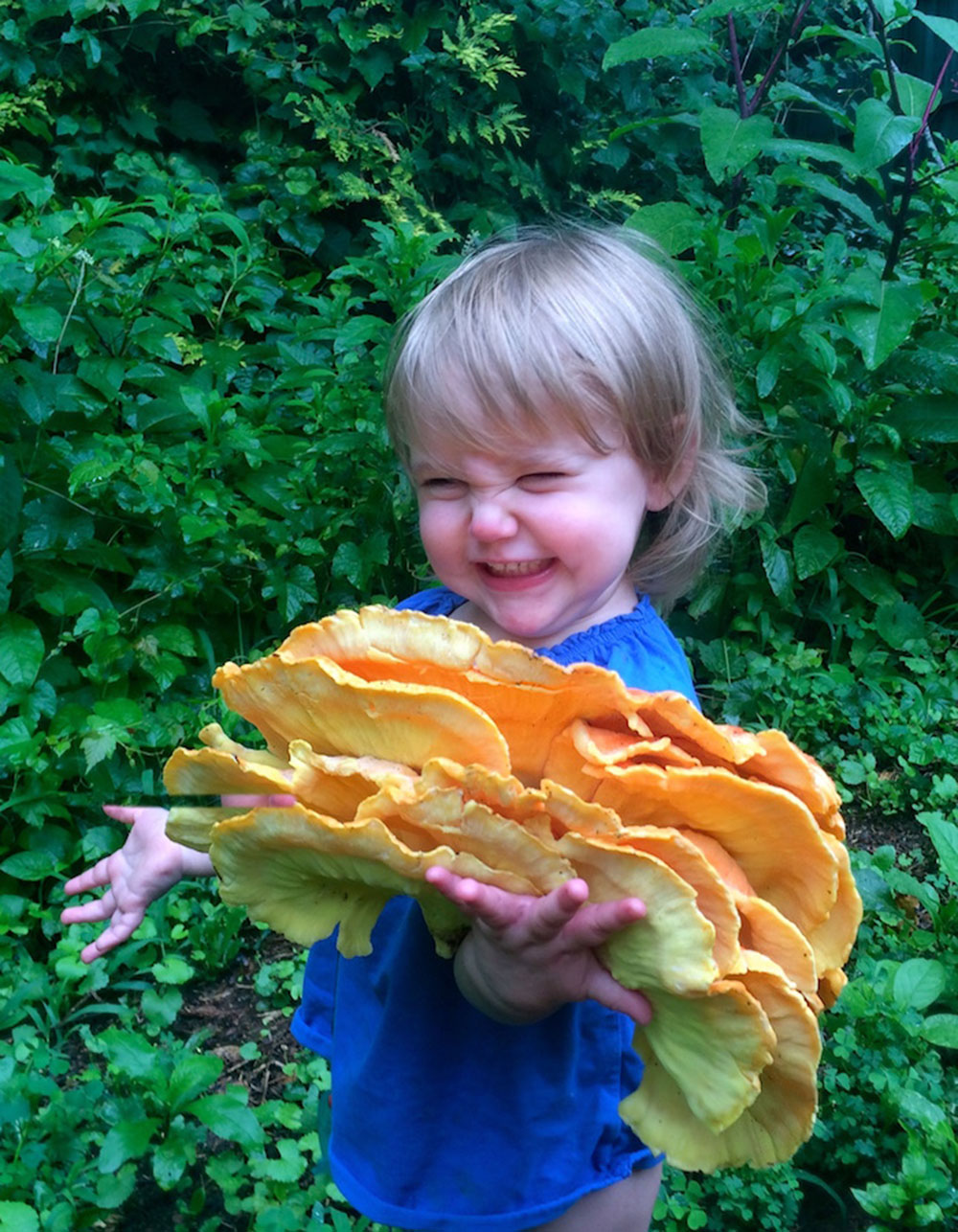 Fungi Foraging & Home Cultivation