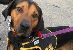 Yancey County Humane Society Benefit