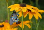 Plant Trees and Shrubs This Fall to Support Pollinators Year-round