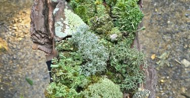 Compleat Naturalist: Lichens—Colorful and Fascinating