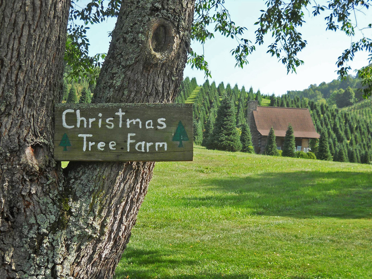 How To Start A Christmas Tree Farm Business