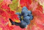 At Thanksgiving, Serve Wines That Give Back
