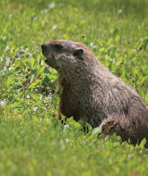 Celebrate Groundhog Day at the Wedge Studios