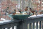 Birds' Winter Survival Tactics