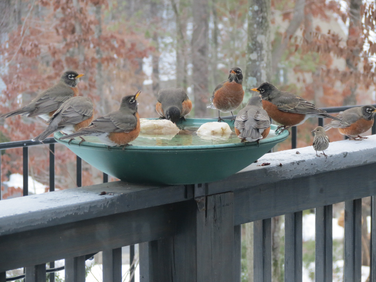 Birds' Winter Survival Tactics