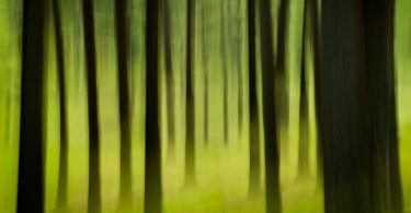 Western North Carolina Forests