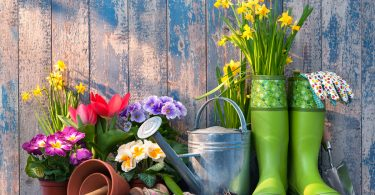 Garden Chores for March
