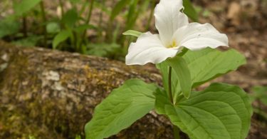 Compleat Naturalist: Spring Bursts on the Mountains