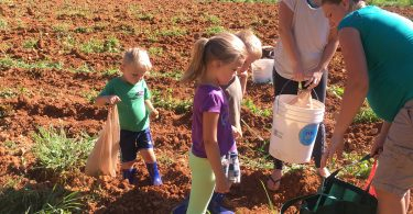 Gleaning Project Collects, Distributes Leftover Harvest