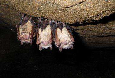 We Need Bats, So Show Them Some Love