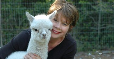The Alpaca Bedding Co.