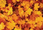 Compleat Naturalist: Leave the Leaves