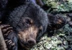 Black Bears and Sleep