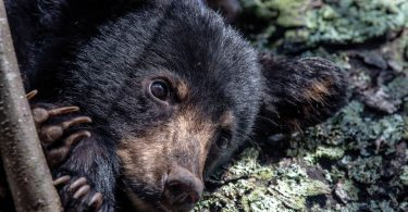 Black Bears and Sleep