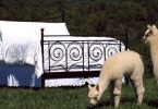 At Home: The Alpaca Home Store