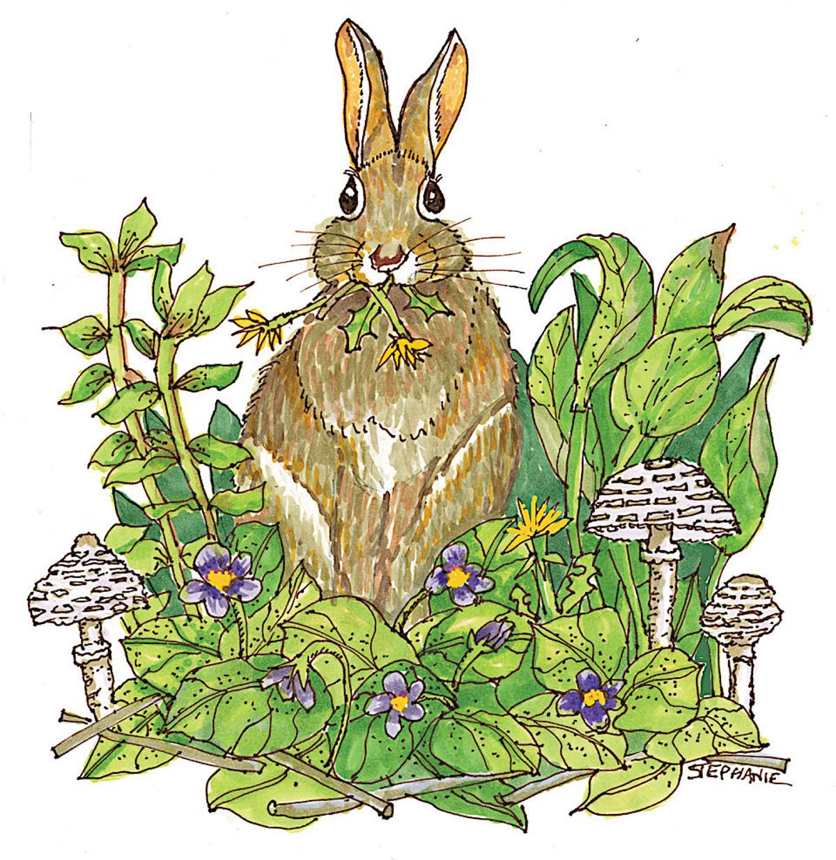 Beatrix Potter, Naturalist & Farmer