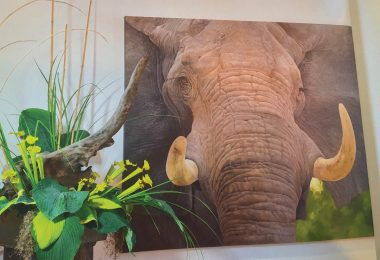 BMCA Art in Bloom bob travers elephant