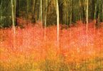 Hickory Nut Gap Autumn. Susanna Euston, photographer