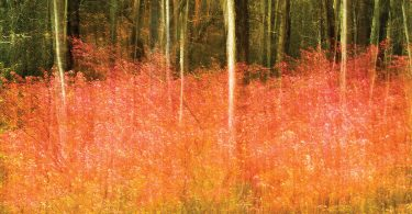 Hickory Nut Gap Autumn. Susanna Euston, photographer