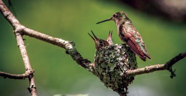 Spotting the Remarkable Hummingbird Nest