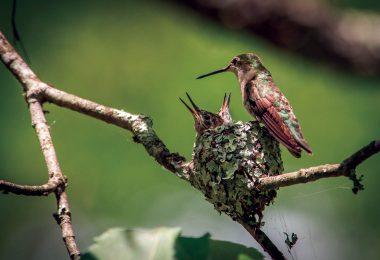 Spotting the Remarkable Hummingbird Nest