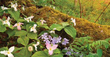 New Field Guide Simplifies Wildflower Identification