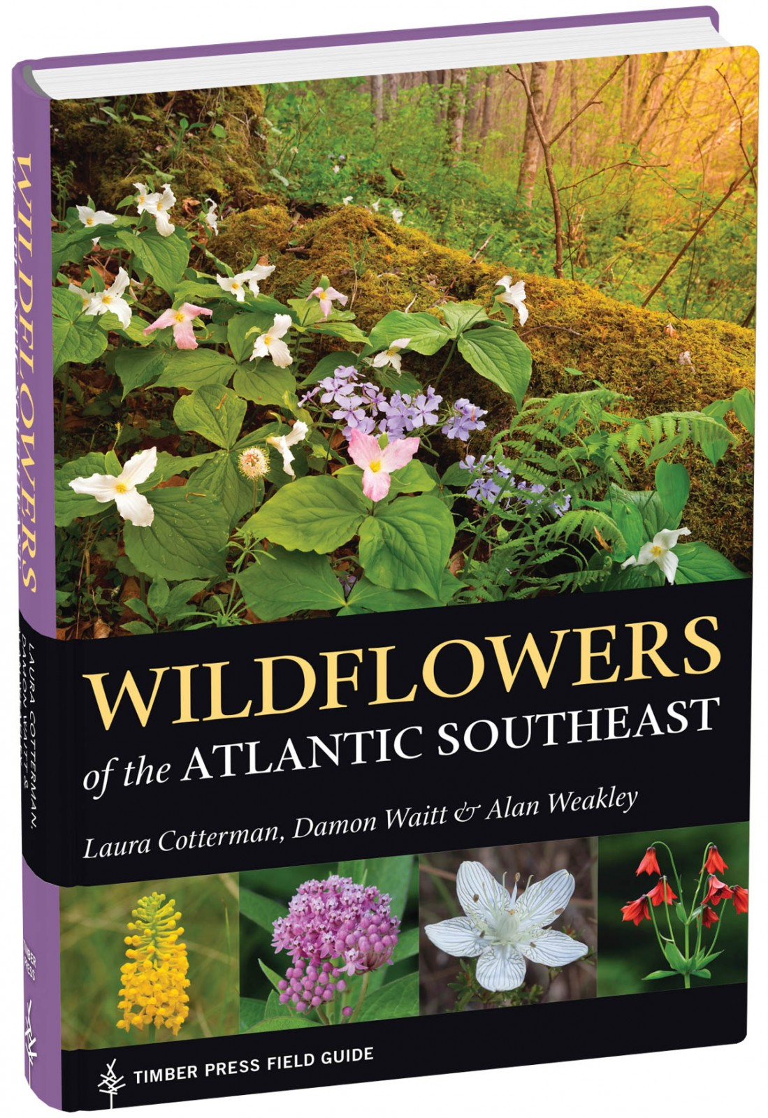 New Field Guide Simplifies Wildflower Identification