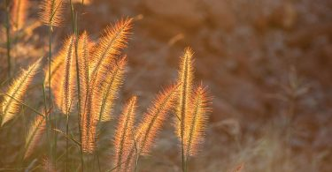 Update Your Landscape with Ornamental Grasses