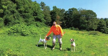 Quail Hunting Expeditions in Mills River