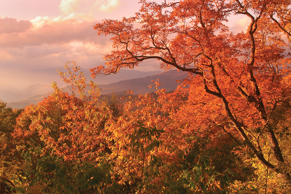 Fall colors in the blue ridge mountains, very orange
