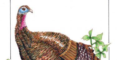 Of a Vegan Childhood & Thanksgiving Turkey