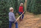 Christmas Tree Farming in Appalachia