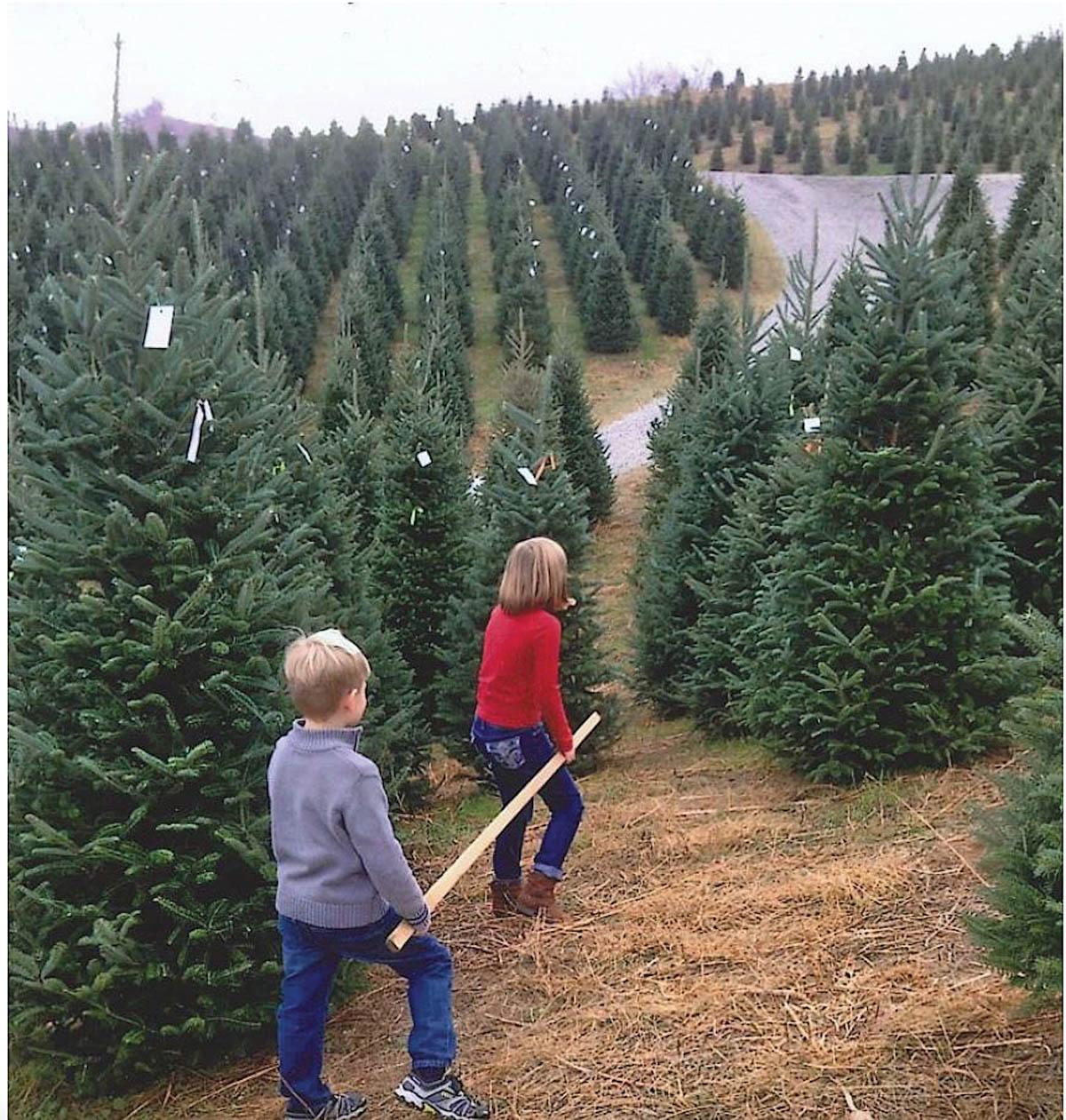Christmas Tree Farming in Appalachia