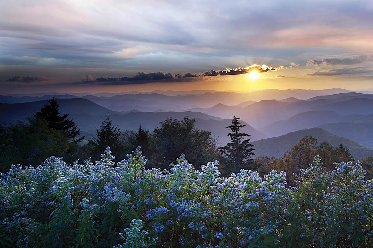 Lavender Dreams. Susan Stanton, photographer