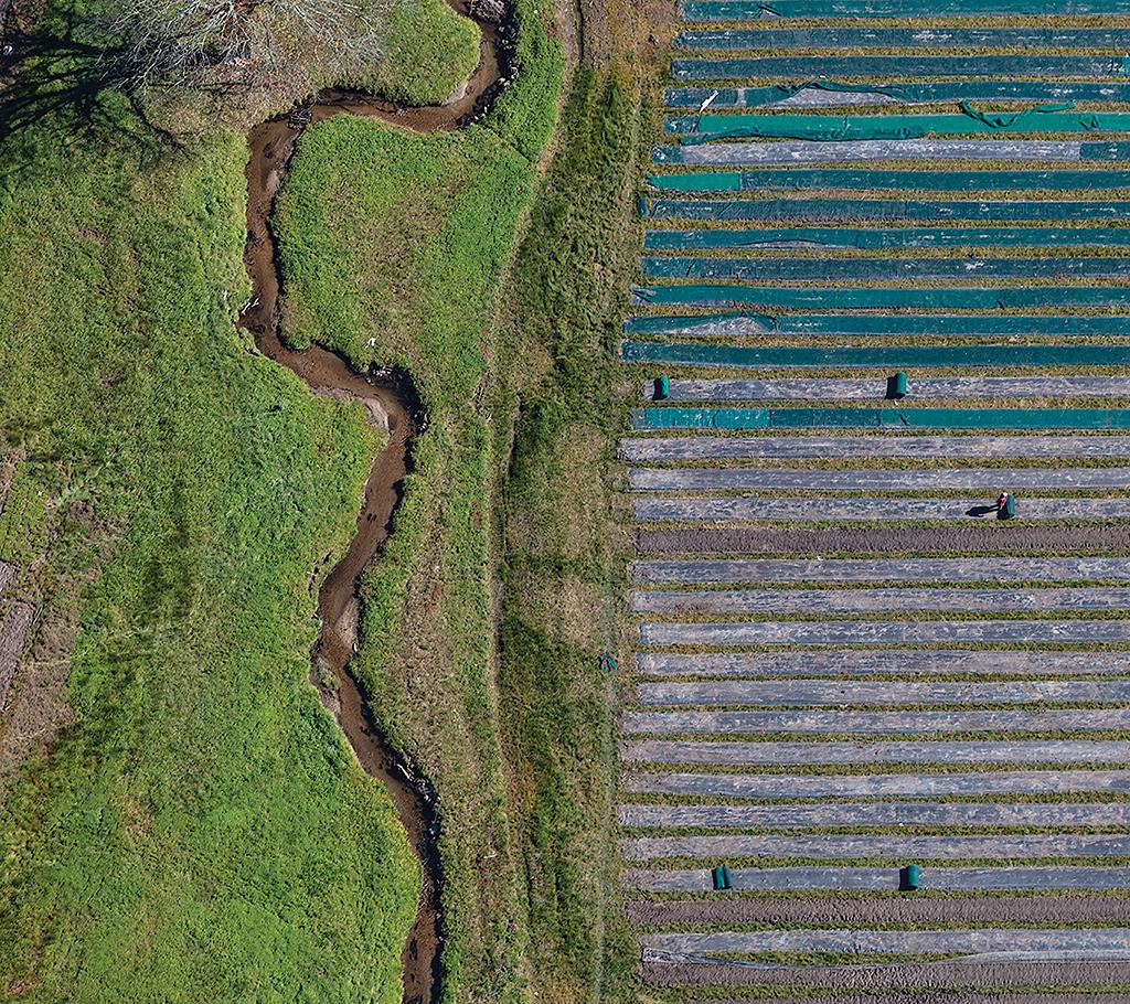 Rolling up Rows of Mulch Fabric, Erastus, North Carolina. Alex S. MacLean, artist
