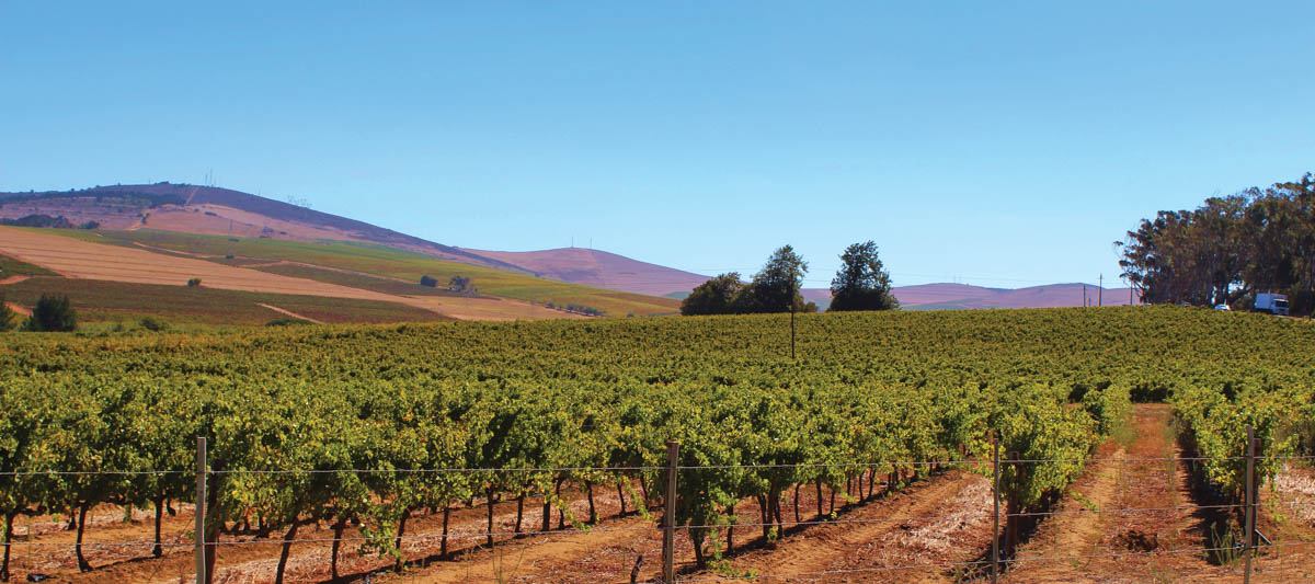 The Grapevine: The Effects of Climate Change on Wine