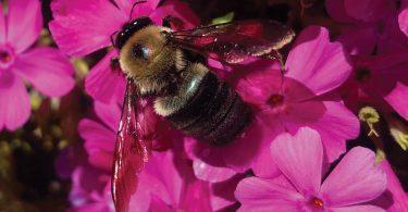 Pollinator Celebration 2020