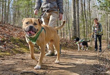 Outdoors: Hiking Hounds