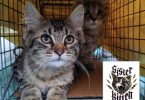 Sister Kitten Animal Rescue Aids Animals & Owners in Need
