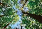 Outdoors: Tree Canopy Protection