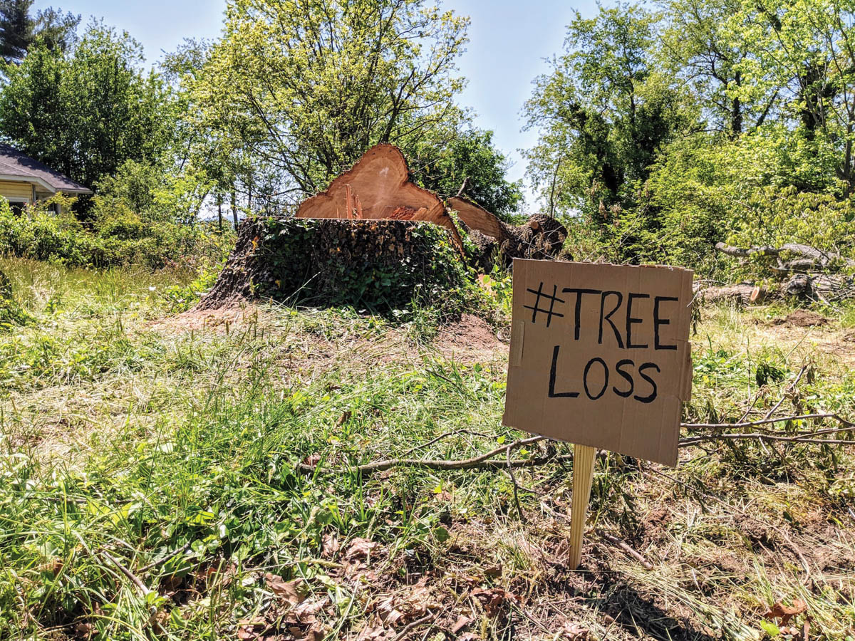 Outdoors: Tree Protection Ordinance